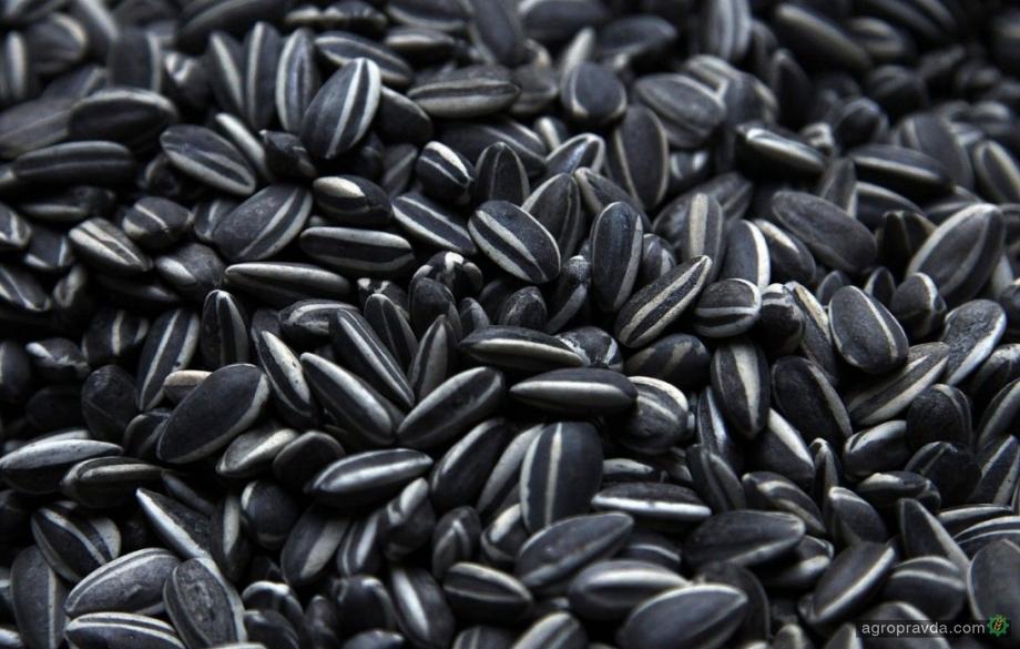 Урожай зерновых и масличных в Украине может составить 95 миллионов тонн