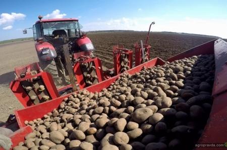 Как выращивать высокорентабельный картофель: опыт польского фермера