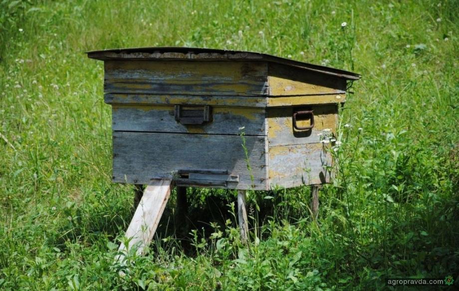 В Украине появились «медовые аграрные расписки»