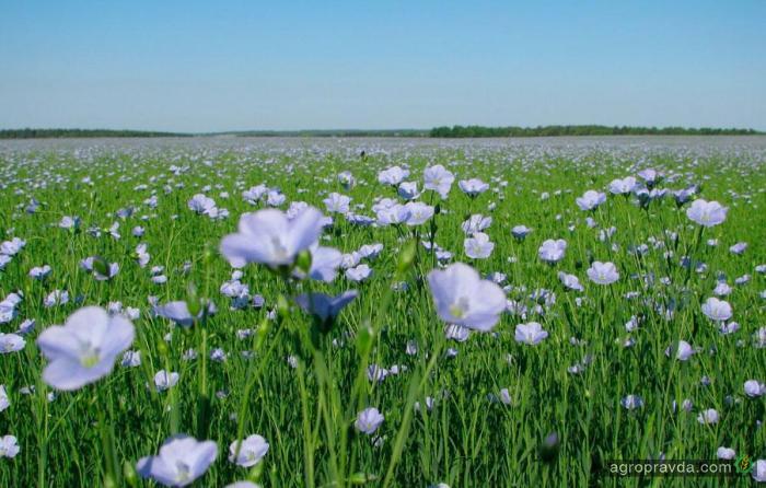 В Украине создана ассоциация производителей льна и конопли