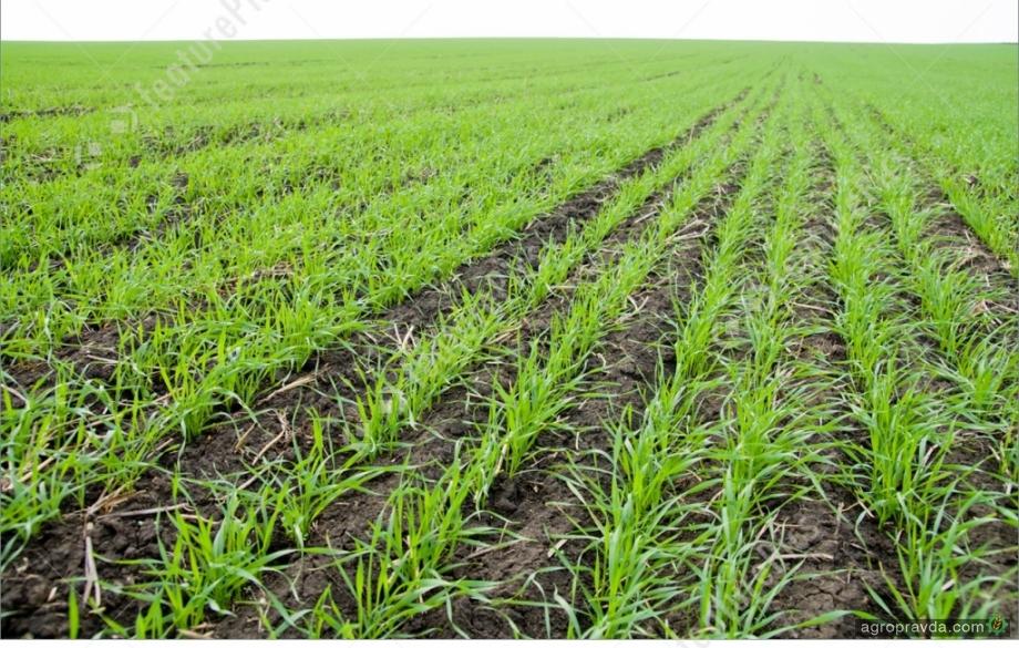 В Украине себя отлично зарекомендовал трехкомпонентный фунгицид для зерновых культур
