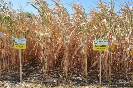 Кукуруза на Битве АГРОтитано2019