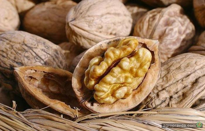 HarvEast Ахметова и Новинского займется выращиванием орехов