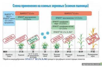 Как защитить и приумножить будущий урожай уже осенью