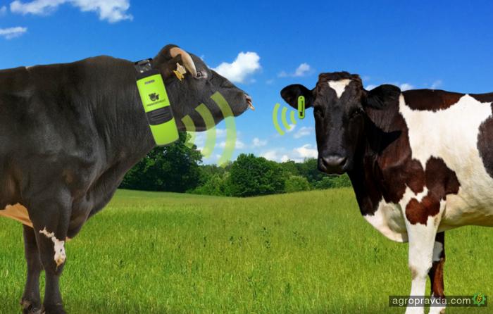 5 хай-тек трендов в животноводстве
