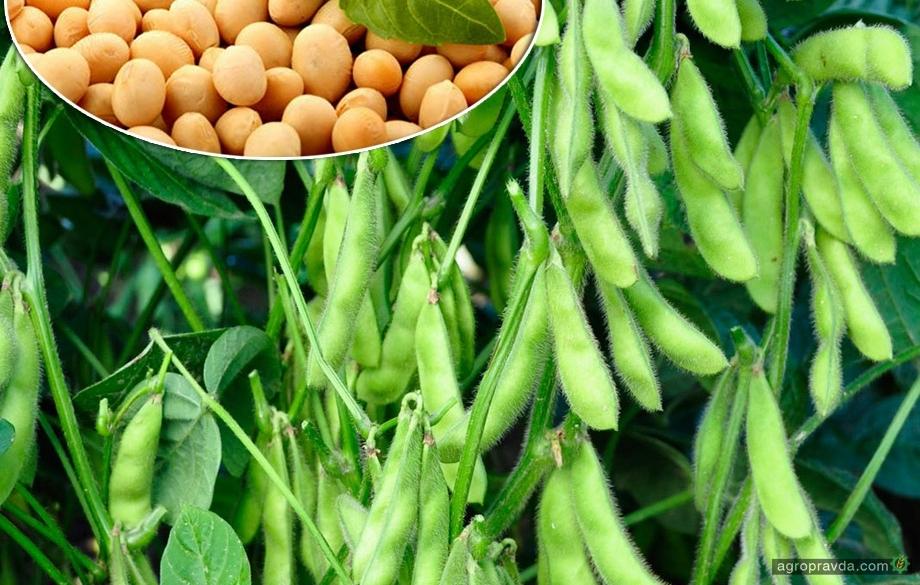 Как организовать рациональное питание посевов сои