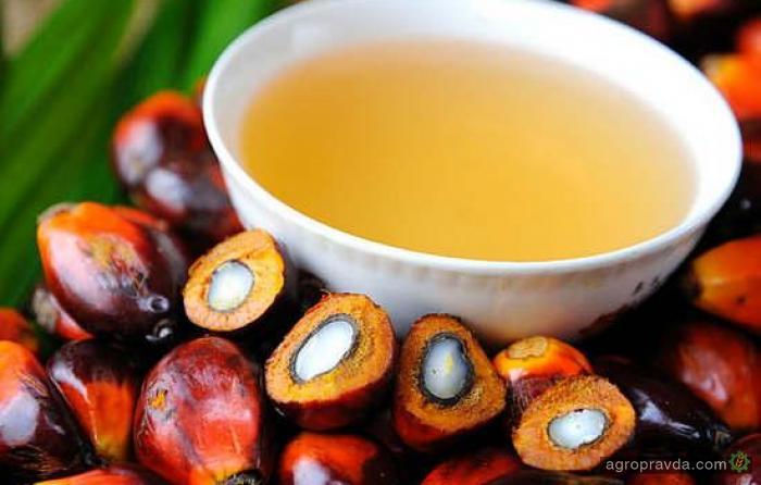 Украина установила новый рекорд по импорту пальмового масла