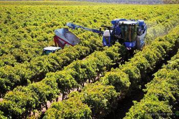 New Holland установил новый рекорд уборки винограда