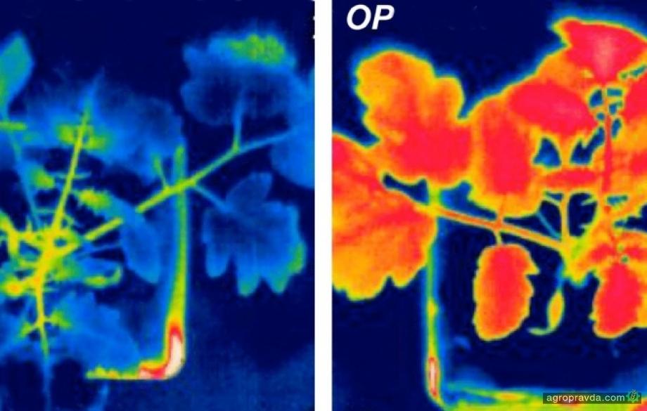 Создан препарат, который помогает растениям удерживать влагу