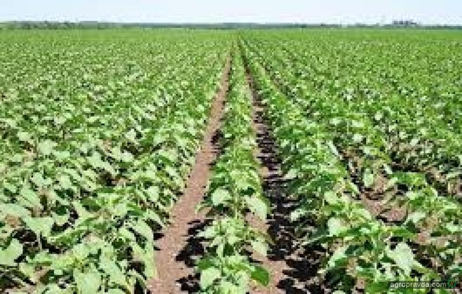Отзывы реальных аграриев: препараты для защиты растений