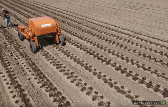 Разработан робот для прополки полей