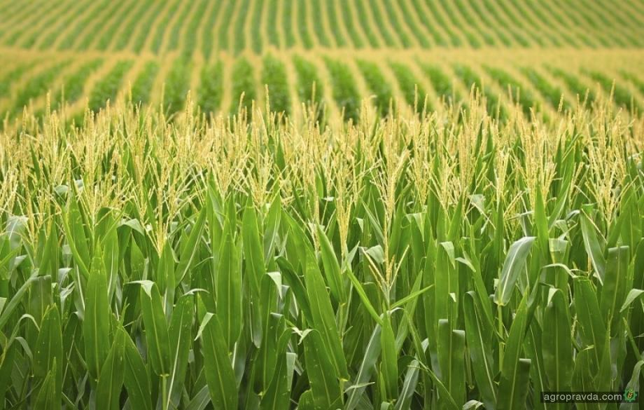 Как применять аммиачную воду в сельском хозяйстве