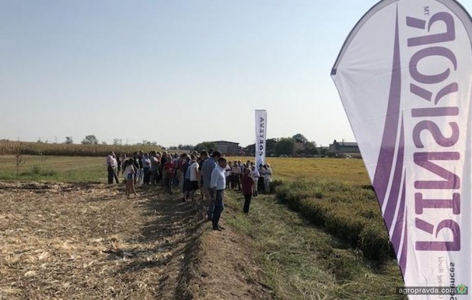 В Европе одобрили новый гербицид для риса