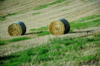 Украинский агростраховой рынок готовится к масштабным реформам
