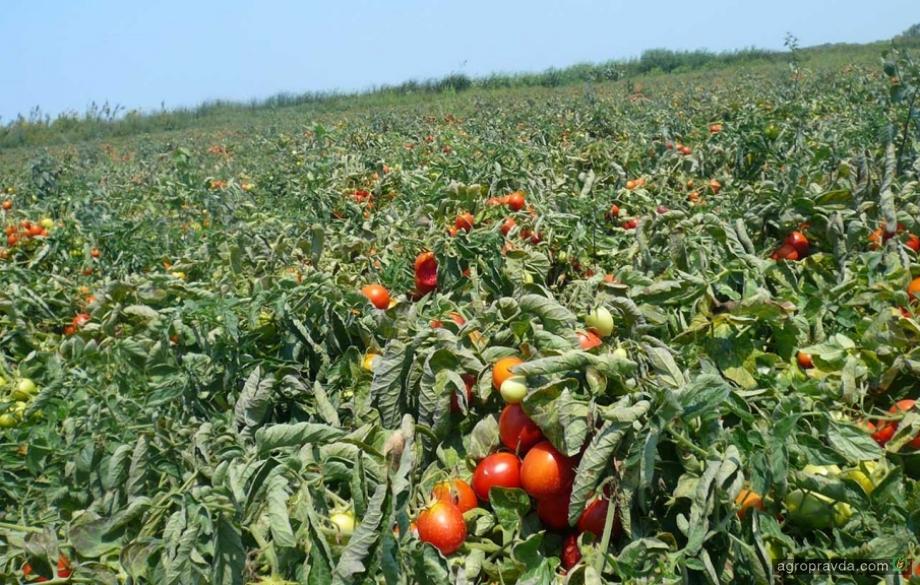 Как предотвратить повышенную угрозу заболеваний овощных культур