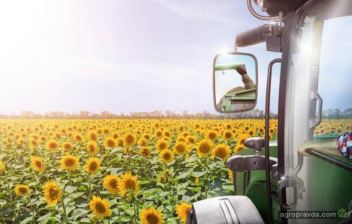 Посевам сои и подсолнечника угрожает ранняя активность репейницы