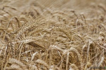 Украина среди худших операторов экспортно-импортных операций с семенами