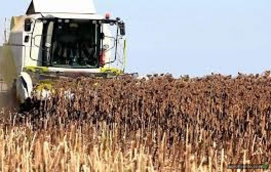 В Черкасской области ожидается высокий валовый сбор подсолнечника