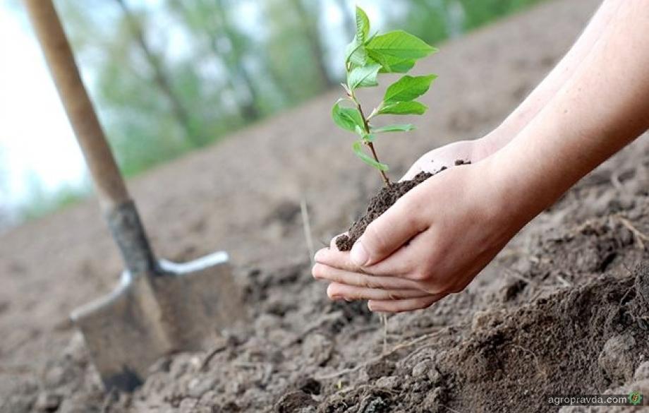 Аграриям компенсируют 120 млн грн за посадочный материал