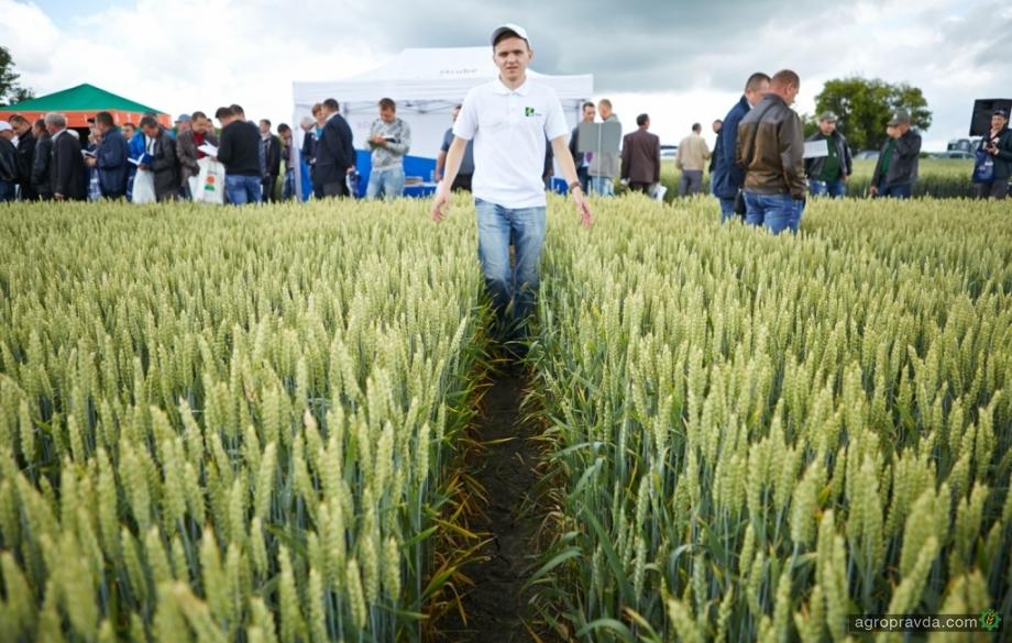 Какие сорта озимой пшеницы предлагает «Западный Буг»
