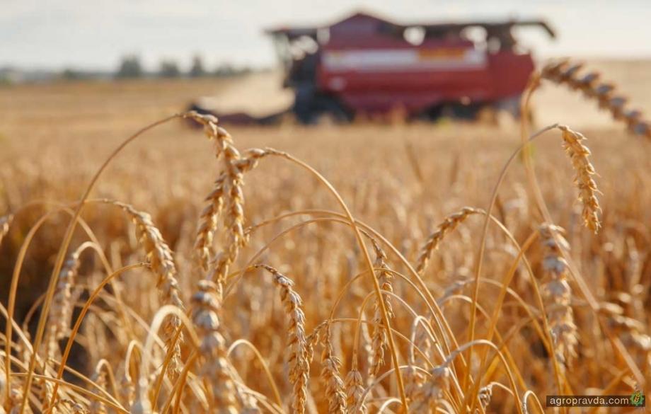 Мировые экспортеры прекратили закупку пшеницы у РФ