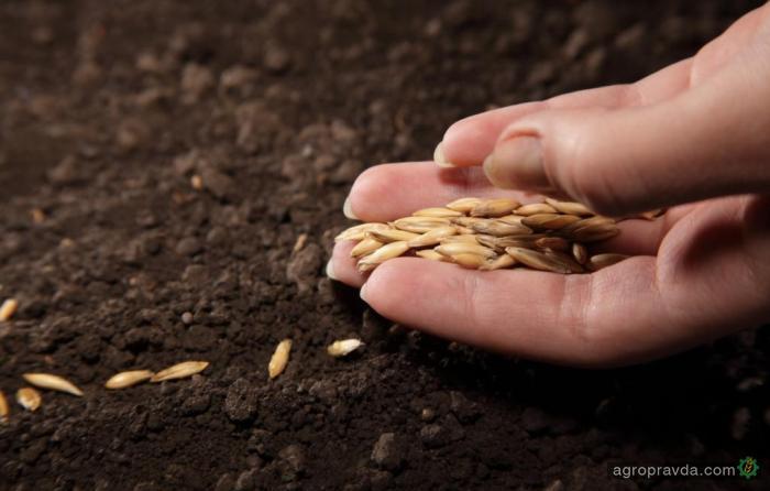 Как получить 80% компенсации за семена сельхозрастений