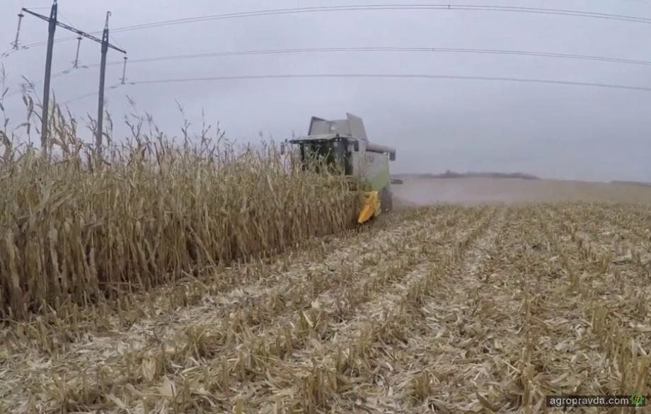 Кукурузная жатка ЖК-82 в работе. Видео