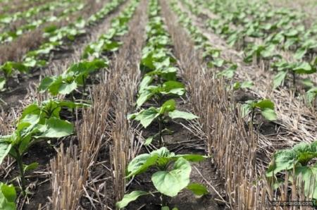 Эффективное агропроизводство в степном регионе: опыт ФГ «Стелла-Макс»