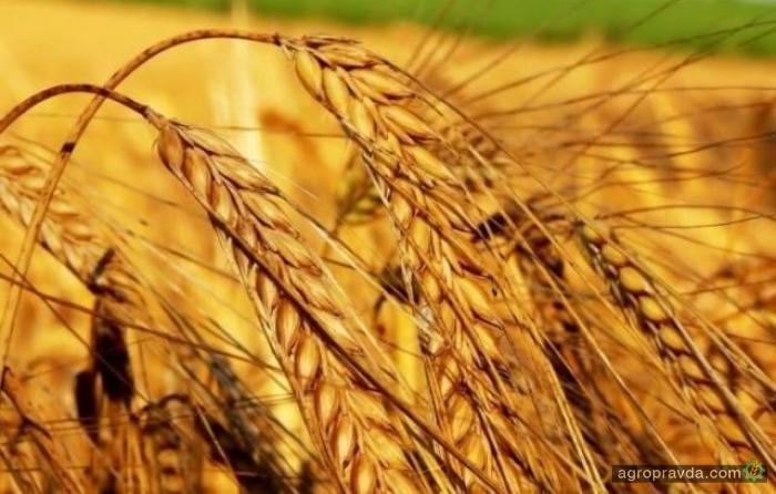 Намолочено почти 8 млн. тонн зерновых