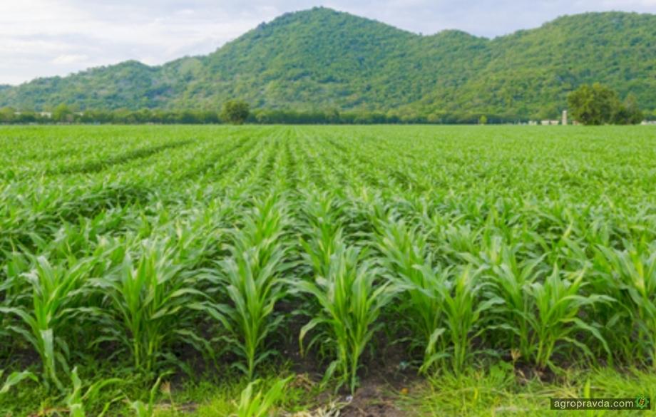Монокультура приводит к снижению урожайности