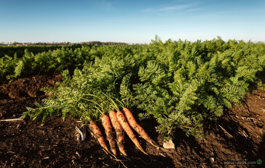 На рынке внедряется новый класс фунгицидов для защиты овощей