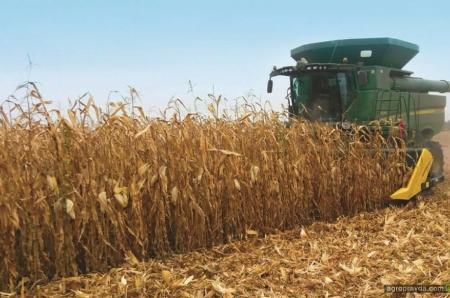Кукуруза в сезоне-2019: опыт ООО «Агробуд»