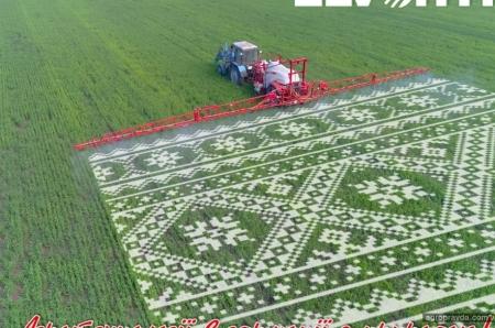 Як аграрні компанії святкують День вишиванки. Фото