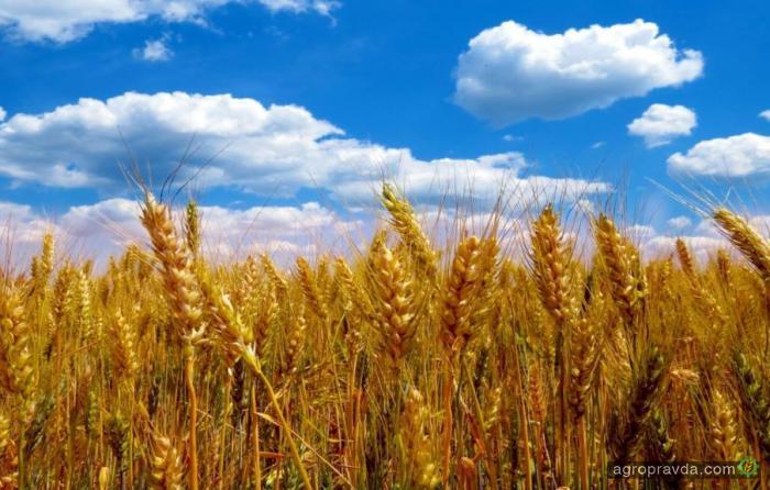 В Украине увеличивают прогноз урожая зерновых в 2018 г.
