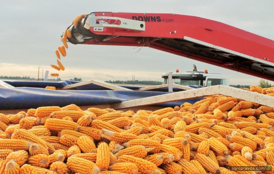 Какие гибриды кукурузы представила RAGT в 2019 году