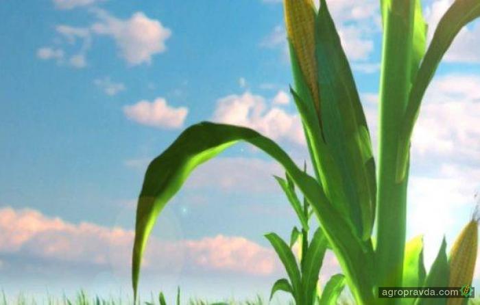 На украинском рынке появился новый отечественный бренд семян Universeed