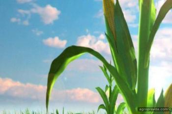 Госпродпотребслужба хочет вернуть контроль за средствами защиты растений