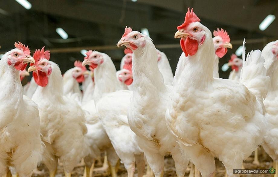 Экспорт мяса птицы из Украины может достичь $1 млрд