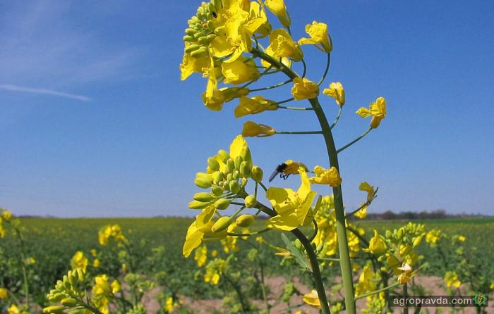 В Украине завершен сев ранних яровых зерновых