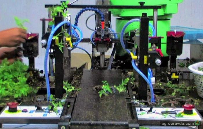 Разработан робот для прививки овощных растений. Видео