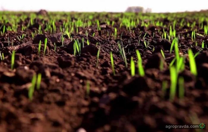 Яровые зерновые в Украине посеяны на 6,1 млн га