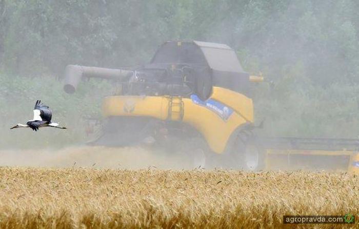 В Турции будут выращивать пшеницу из Украины