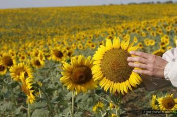 Ученые спрогнозировали уровень продукции растениеводства в Украине-2018