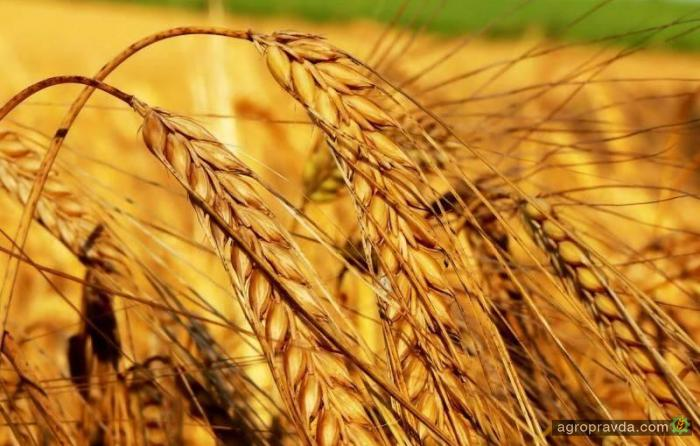 Аграрии экспортировали почти 36 млн тонн зерновых