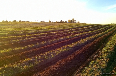 Как бороться с засухой и готовиться к рынку земли: СТОВ «Жахновка»