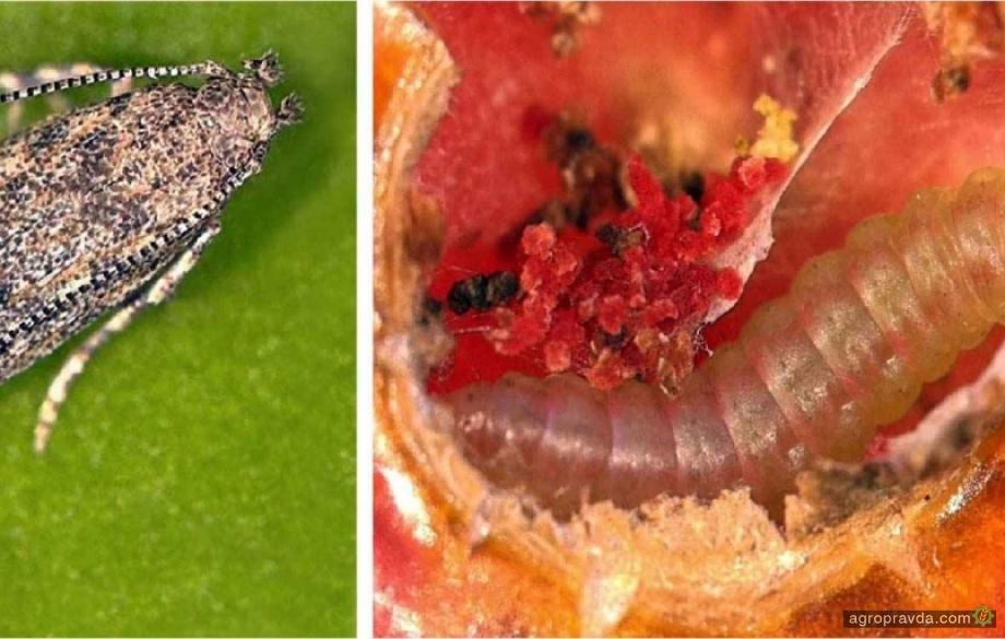 На рынке появился новый органический инсектицид