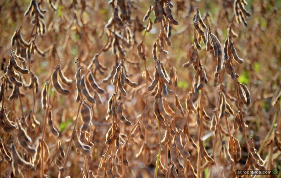 «Агрофьюжн» завершил уборку бобовых культур